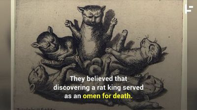 The Strange and Disgusting History of Rat Kings