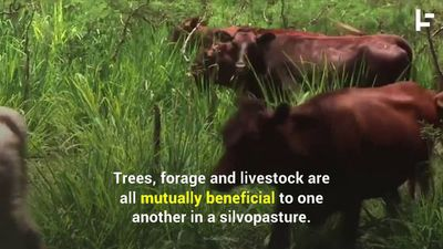How This New Diet for Cows Will Help Save the Environment