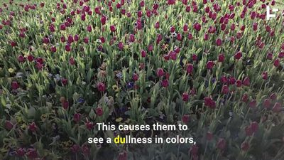 These Glasses Help Color Blind People to See More Colors