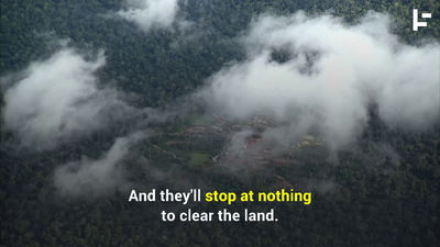 Are Criminal Networks Responsible for the Amazon Forest Fire?