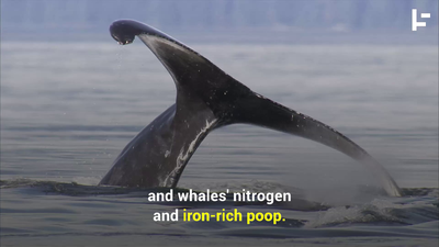 Why a Whale Is Worth More Than Two Million Dollars
