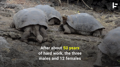 This Tortoise Had So Much Sex, He Saved His Species