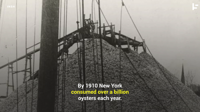 New York City and the Oyster
