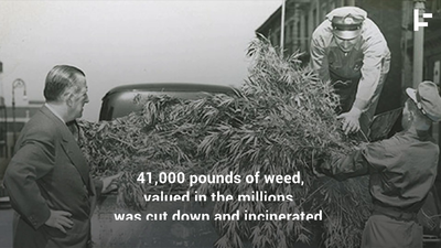 Brooklyn in the 50s: Where Dope Was a Weed That Grew Everywhere