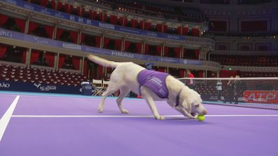 Match-pointer! Ball-dogs let loose on tennis court