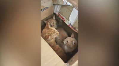 Video shows 11 abandoned cats being rescued from boxes