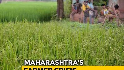 Maharashtra Grapples With Farmer Suicides