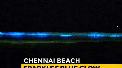 Sparkling Blue Waves In Chennai Leave People In Awe, Scientists Curious