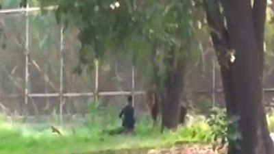 Man Sits Face-To-Face With Lion At Enclosure In Delhi Zoo, Rescued