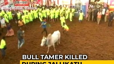 Man Gored To Death At Bull-Taming Sport Jallikattu In Tamil Nadu