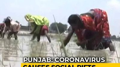 Migrants Gone, Farm Owners And Local Workers Fight Over Wages In Punjab