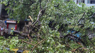 Mumbai May Have Escaped Worst Of Cyclone Nisarga, Wind Speed Slows Down
