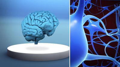 Researchers propose new hypothesis to explain Alzheimer's