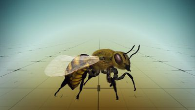 Honeybees learn how to do simple arithmetic