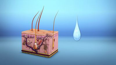 Moisturizer reduces risk of age-related diseases, study finds