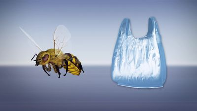 Bees build nests from plastic