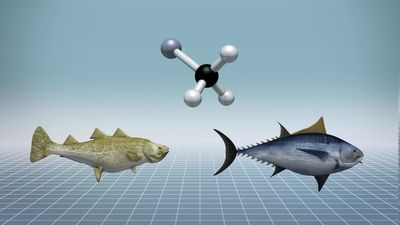 Study finds increased toxic mercury levels in tuna and cod