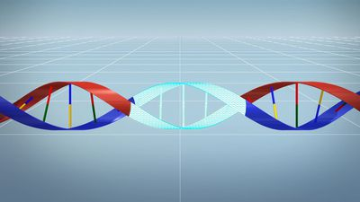 New gene editing tool corrects genetic mutations more precisely