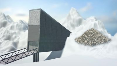 'Doomsday vault' receives its largest ever deposit of seeds