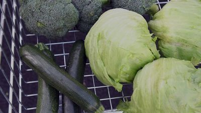 What's the difference between plant-based diet, vegan and vegetarian?
