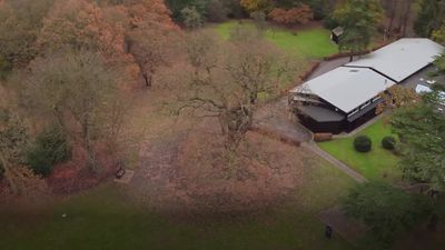 Scouting's iconic Gilwell Oak voted England and UK's 'Tree of the Year'