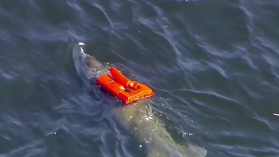 Manatee saved after getting stuck in life jacket