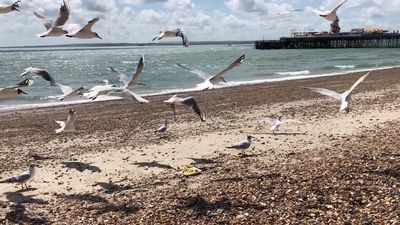 Glaring at seagulls makes them less likely to steal your food