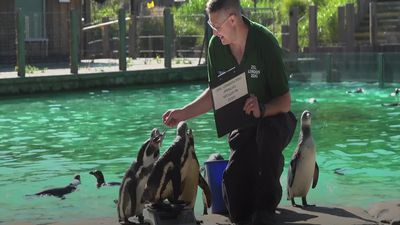 Penguins, monkeys and lions take part in London Zoo's 2019 weigh-in