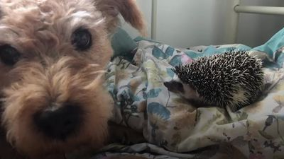 Dog and hedgehog duo take Instagram by storm
