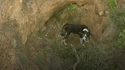 Jimmy the dog rescued after getting stuck in cliff face in Australia
