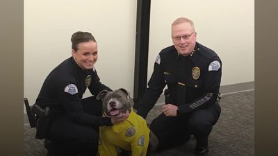 Terminally ill dog becomes police K9 for the day