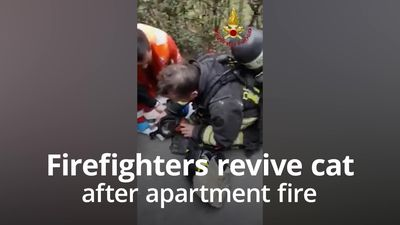 Cat is miraculously revived by firefighters