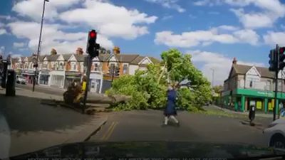 Collapsing tree caught on dashcam as it just misses people