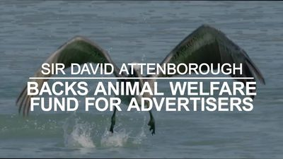 Sir David Attenborough backs animal welfare fund for advertisers