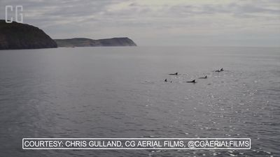 Stunning aerial footage of dolphins feeding off the coast of the Isle of Man