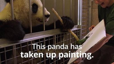 Painting panda's artwork is for sale