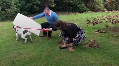 Lottery winner's dog knocks him over during celebratory photocall