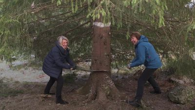 Trafalgar Square Christmas tree felled in Oslo forest
