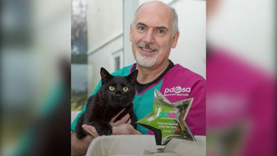 Two-year-old cat wins award for surviving airgun attack