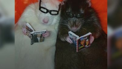Meet the rat-loving woman who dresses up her pets for Instagram