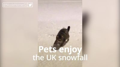Pets enjoy playing in snow as cold snap hits UK