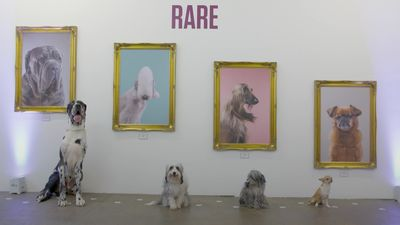 Art gallery for dogs opens in London