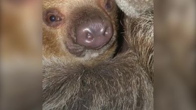 Family transform home into tropical rainforest for pet sloth