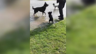 Dogs enjoy flood created by Storm Gareth