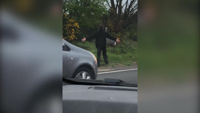'Runaway ostrich' holds up rush hour traffic
