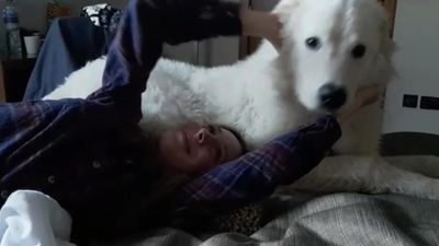 Brilliant student suffering with chronic pain finds salvation in sheepdog