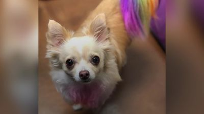 Woman defends dyeing her dogs an array of colours