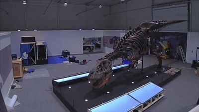 Tyrannosaurus rex ready to meet visitors in Glasgow