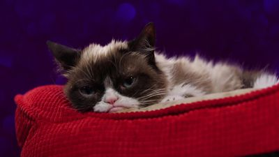 Grumpy Cat: Internet sensation dies aged seven