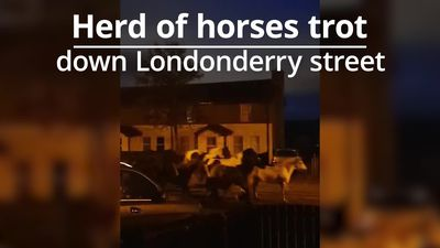 Horses spotted trotting down Londonderry street